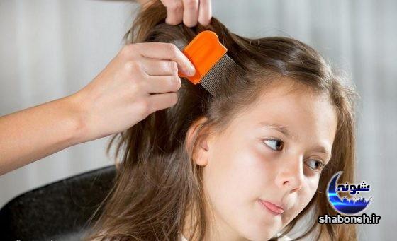 درمان شپش سر در منزل و علائم ابتلا به شپش