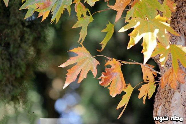 عکس پاییزی بدون متن برای پروفایل