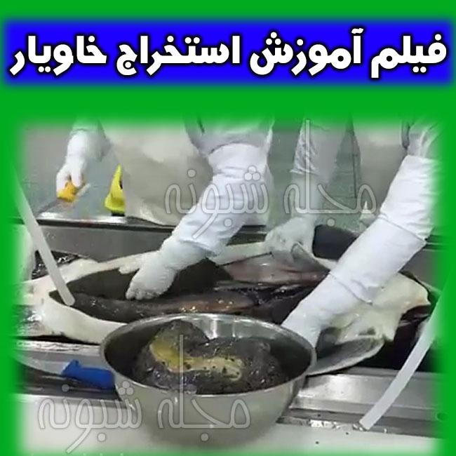 استخراج خاویار چگونه است؟ آموزش استخراج خاویار از ماهی