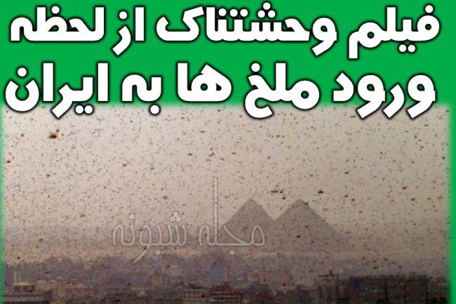 هجوم آفت ملخ در شهرهای ایران + تصاویر حمله و هجوم ملخ ها به ایران