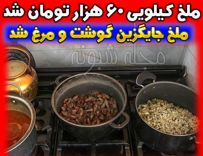 خوردن ملخ در شهرهای ایران ملخ نوبرانه کیلویی 60 هزار تومان