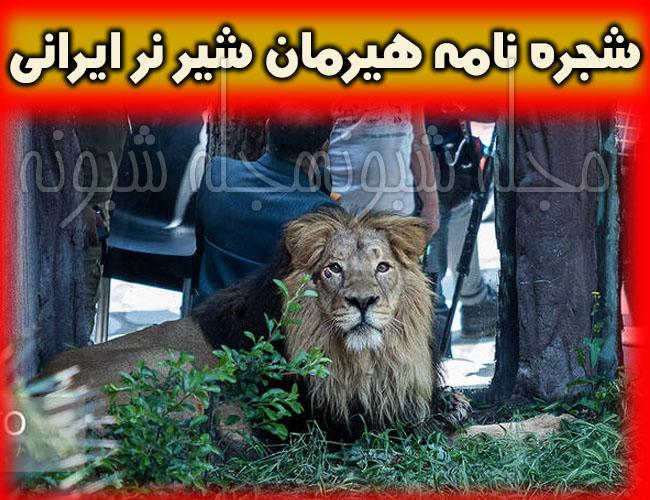 تصاویر هیرمان شیر نر ایرانی و عکس های کامران شیر باغ وحش ارم