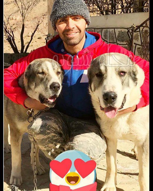 سگ های شهاب شادابی