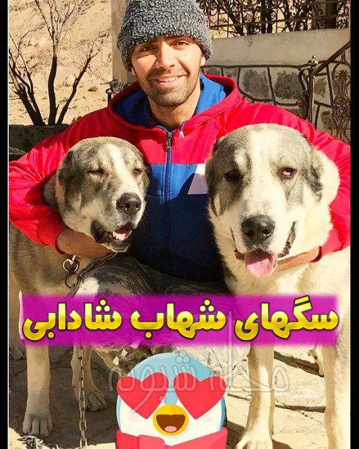 شهاب شادابی و سگ هایش
