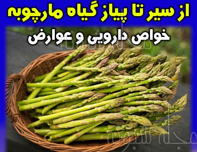 خواص مارچوبه فواید | قیمت مارچوبه خوراکی و ضرر و عوارض گیاه مارچوبه و آموزش کاشت