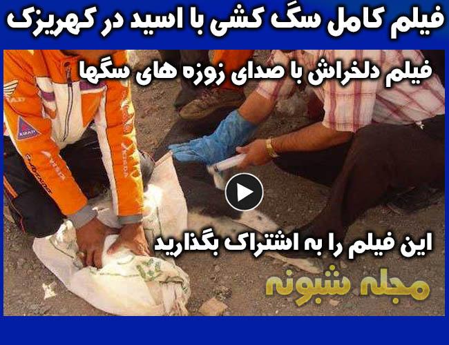 کشتار سگهای کهریزک با تزریق اسید و سم + عکس بدون سانسور سگ کشی با آمپول اسید در کهریزک