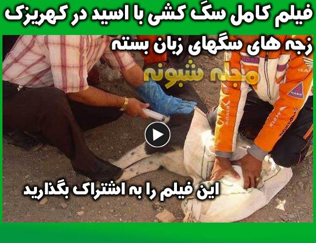 کشتار سگهای کهریزک با تزریق اسید و سم + فیلم بدون سانسور سگ کشی با آمپول اسید در کهریزک