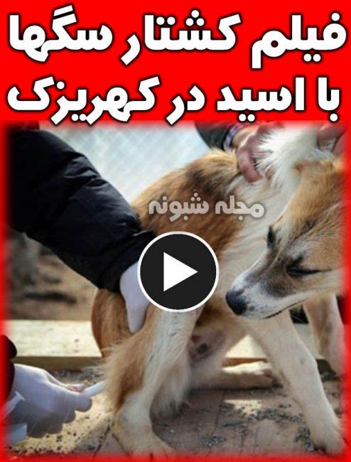 کشتار بی رحمانه سگهاي کهريزک تهران با تزریق اسید و سم