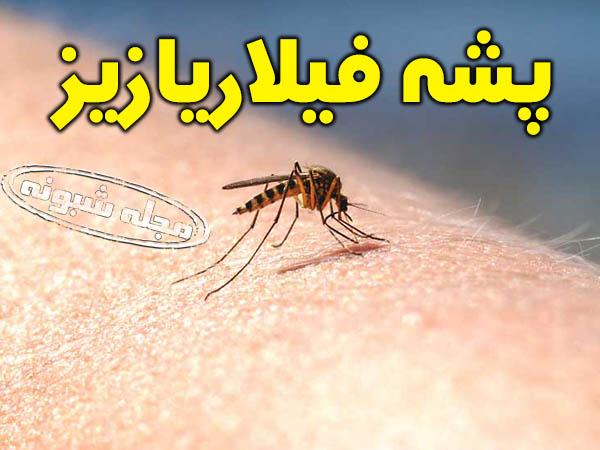 بیماری فیلاریازیس لنفاوی (پا فیلی) چیست؟ تصاویر پشه فیلاریازیز و بیماران پا فیلی