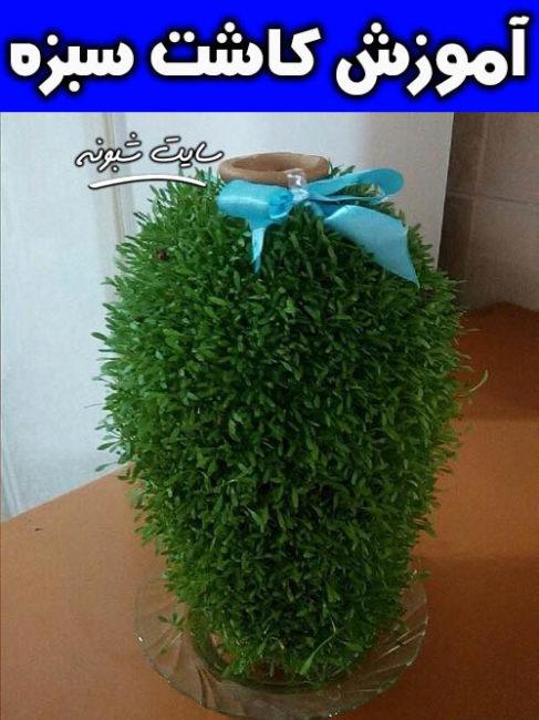 آموزش کاشت سبزه و مدل های زیبای سبزه عید نوروز +تصاویر