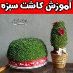 آموزش کاشت سبزه جدید و مدل های زیبای سبزه عید نوروز +تصاویر