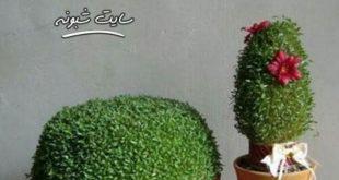 آموزش کاشت سبزه و مدل های زیبای سبزه +تصاویر