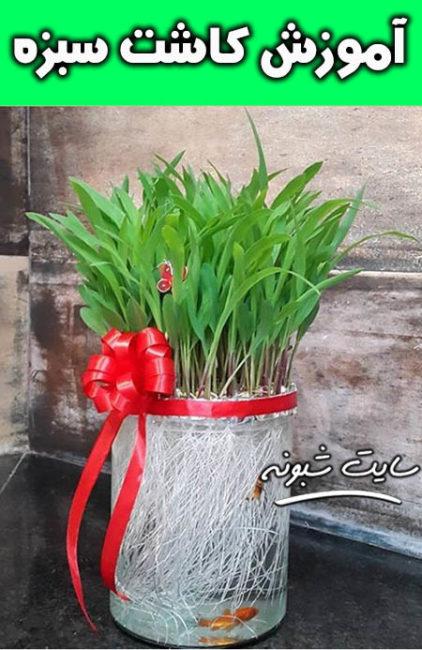 آموزش کاشت سبزه ذرت عید نوروز و مدل های زیبای سبزه +تصاویر