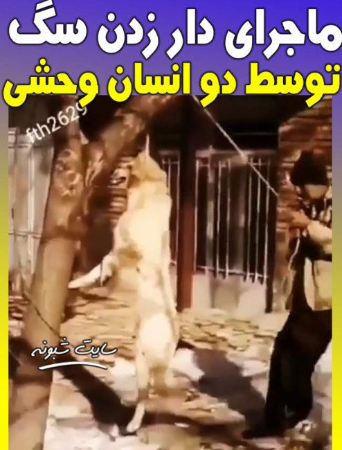 فیلم دار زدن سگ روی درخت