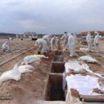 آمار وحشتناک فوتی های کرونا در ایران امروز (19 تیر 99)