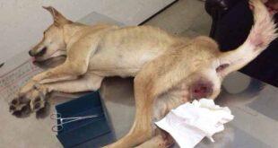تجاوز به سگ توسط دو مرد مست اسرائیلی +عکس