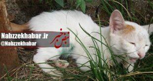 تجاوز به گربه در پارک بانوان رشت +عکس