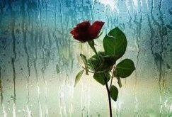 عکس پروفایل بارانی و عکس نوشته