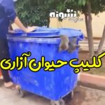 گربه آزاری و شکنجه گربه با سطل زباله (فیلم)