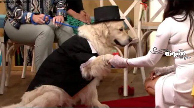 ازدواج یک زن با سگ +تصاویر و جزئیات